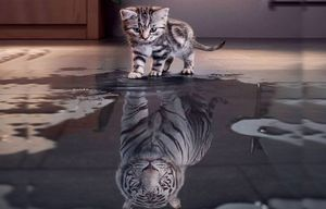 cat become tiger